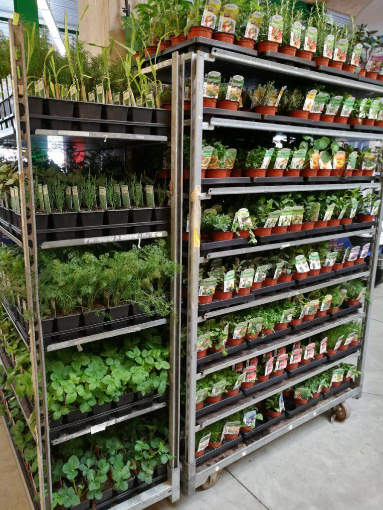 Journée de la tomate - Green Mat
